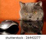 Stock photo focus on a mouse 26442277