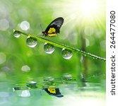 fresh green grass with dew...   Shutterstock . vector #264477080