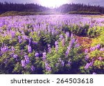 mountain meadow in alaska | Shutterstock . vector #264503618