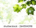 green leaves and sunlight | Shutterstock . vector #264504398