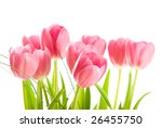 tulips isolated on white... | Shutterstock . vector #26455750