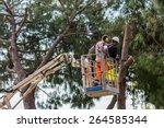 Professional Lumberjack Cuts...