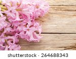 pink hyacinth in a wooden table. | Shutterstock . vector #264688343
