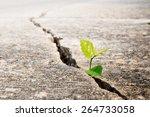 Plant Grow On Street   Concept...