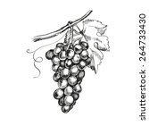 sketch bunches of grapes.... | Shutterstock .eps vector #264733430