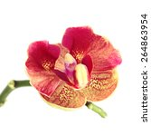 Red Orchid Flower Isolated On...