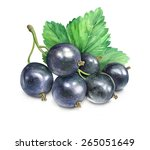 black currant  isolated... | Shutterstock . vector #265051649
