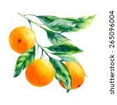 vector watercolor fruit orange... | Shutterstock .eps vector #265096004