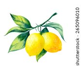 Vector Watercolor Fruit Lemon...