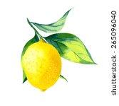 vector watercolor fruit lemon...   Shutterstock .eps vector #265096040