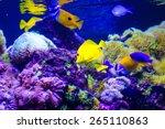 Colorful Tropical Sea Fish