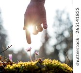 hand of a man above a mossy... | Shutterstock . vector #265141823