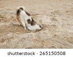 Dog Head In Sand Beach Like...