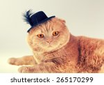 Cat Wearing Felt Hat With...