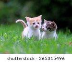 Stock photo kittens in the garden 265315496