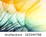 dandelion seed in golden... | Shutterstock . vector #265344788