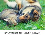 Stock photo dog and cat best friends playing together outdoors lying on the grass 265442624