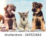 puppies on the beach | Shutterstock . vector #265521863