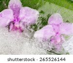 Two Flowers Pink Orchid With...