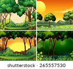four scenes of forest at day... | Shutterstock .eps vector #265557530