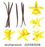 Vanilla Pods And Flower...