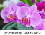 close up of pink orchid... | Shutterstock . vector #265591040