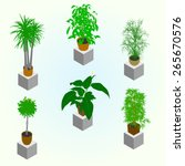 Planting Of Greenery For The...