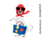Stock photo jack russell dog diva lady with bag shopping at supermarket isolated on white background 265680929