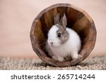 A Little Bunny In A Wooden Pot...