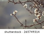 Blossoming Almond Tree Branche...