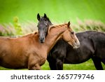 Two Horses Embracing In...
