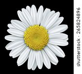 white daisy close up isolated... | Shutterstock .eps vector #265824896