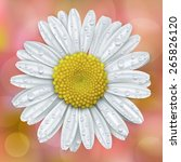 white daisy head with water... | Shutterstock .eps vector #265826120
