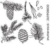 Vector Fir Branches