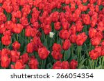 one white tulip in a lot of red ... | Shutterstock . vector #266054354