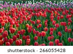 colorful tulips  tulips in... | Shutterstock . vector #266055428