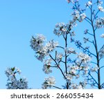 a branch of the cherry blossoms.... | Shutterstock . vector #266055434