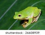 frog | Shutterstock . vector #26608939