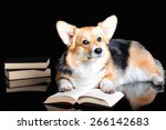 welsh corgi pembroke  isolated... | Shutterstock . vector #266142683