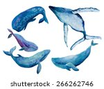 watercolor illustration whales... | Shutterstock .eps vector #266262746