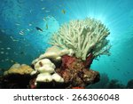 White Color Of Hard Corals Is...