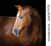 Portrait Of Red Horse On The...