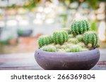 green cactus | Shutterstock . vector #266369804