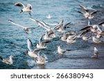 Birds Swans Sea Gulls  Water...