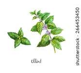 mint. watercolor illustration | Shutterstock .eps vector #266453450