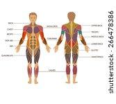 vector muscular human body ... | Shutterstock .eps vector #266478386