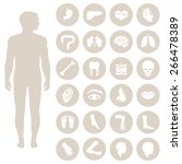 human body anatomy  vector... | Shutterstock .eps vector #266478389