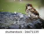 Close Up Of A Sparrow At...