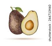 avocado  hand drawn watercolor  ... | Shutterstock .eps vector #266713460