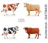 Different Cows Colors Set ...